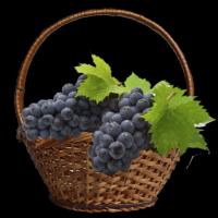 винні сорти винограду