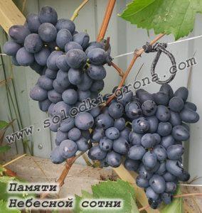виноград Пам'яті Небесної сотні