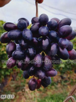 виноград ВК 115 / VK 115