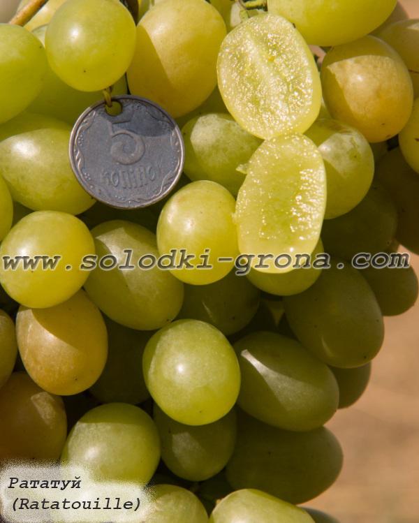 виноград Рататуй
