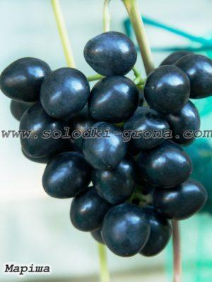 виноград Маріша