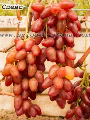 виноград Спейс / Space