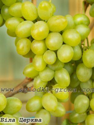 виноград Біла Церква / White Church