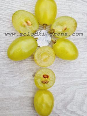 виноград Маша / Masha