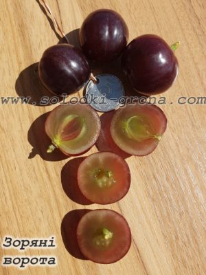 виноград Зоряні ворота / Star Gates
