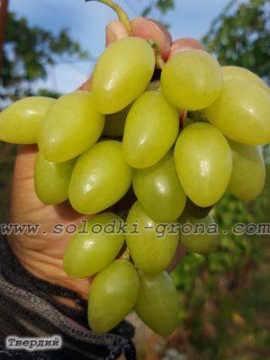виноград Фаіна (Твердий) / Faina