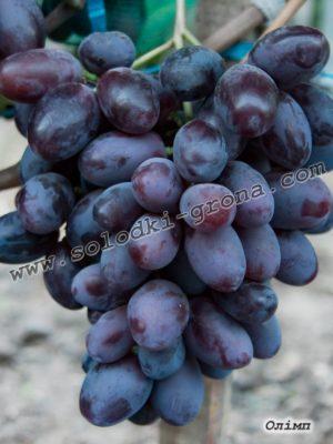 виноград Олімп