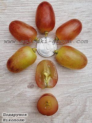 виноград Подарунок Нікополю